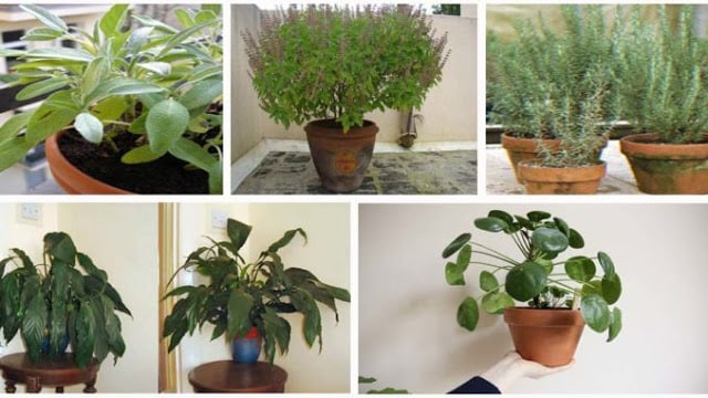 12 Plantas para ter energia positiva